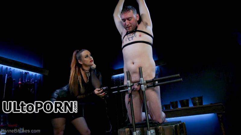 Divinebitches.com, Kink.com: Bella Rossi, Dozer - New Male Dom Made to Submit and Take Pain from Goddess Bella Rossi   [629 MB / SD / 540p] (Femdom)